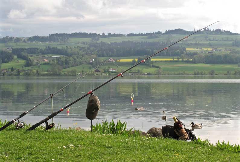 365 x Sempach Canne à pêche au bord du lac de Sempach